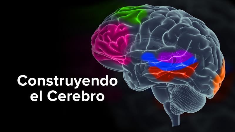 Construyendo el Cerebro
