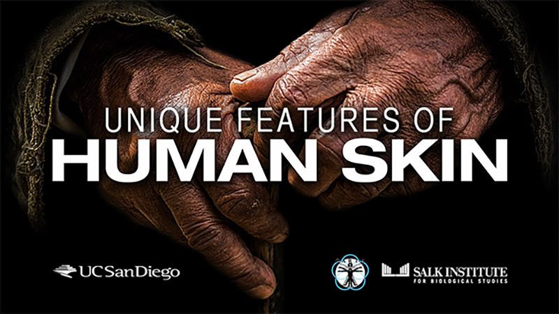 CARTA: Unique Features of Human Skin