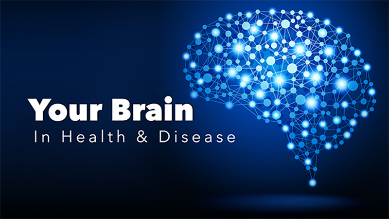 Your Brain in Health and Disease