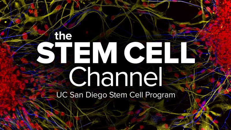 The Stem Cell Channel