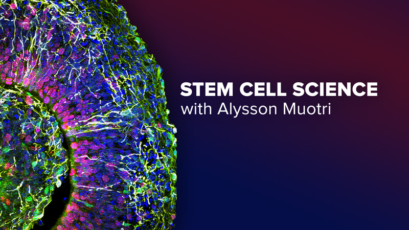 Stem Cell Science with Alysson Muotri