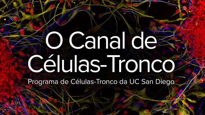 O Canal de Células-Tronco