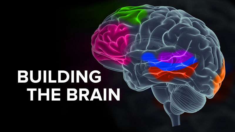 Building the Brain