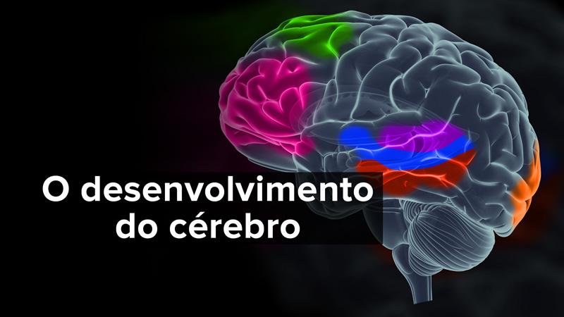 O Desenvolvimento do Cérebro