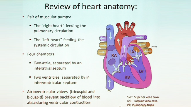 VIDEO: Follow Your Heart: Anatomy of the Cardiovascular System, Part ...