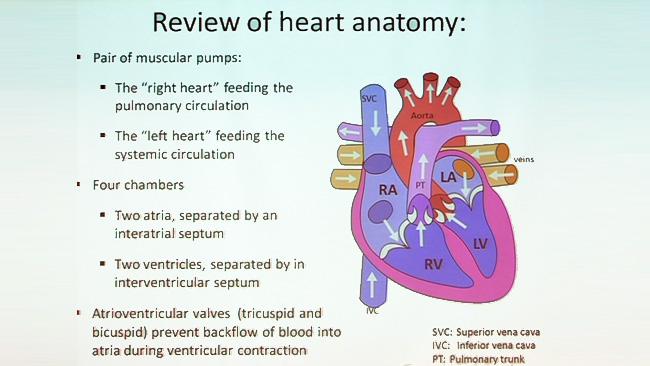 Follow Your Heart Anatomy Of The Cardiovascular System