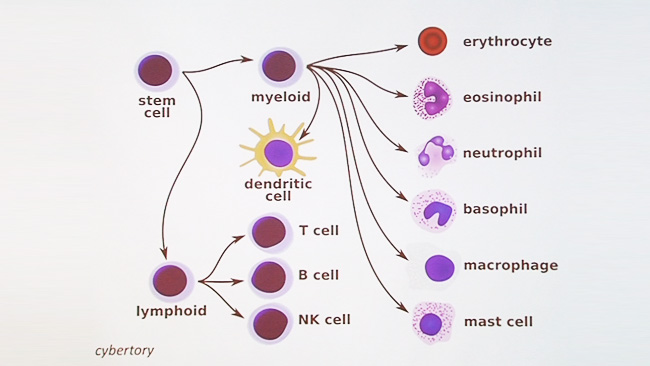Immunology 101: The Basics and Introduction to our Patient - UCTV ...