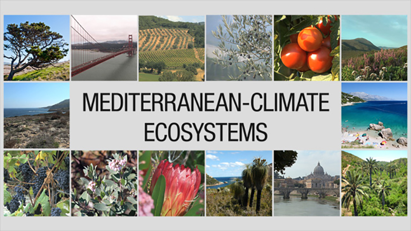mediterranean woodlands ecosystem The mediterranean ecosystem occurs only in five relatively small areas around the planet: the area bordering the mediterranean sea, central chile, the cape region of south africa, southwestern and southern australia, and, of course, southern california and northern baja california.